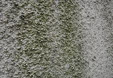 イメージ 外壁・屋根のコケ・藻