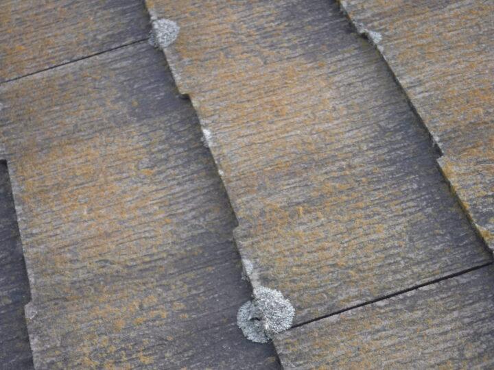 屋根 微生物汚染(苔)