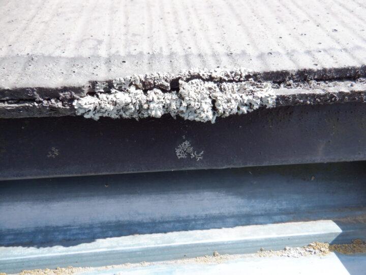 屋根 苔・藻の発生