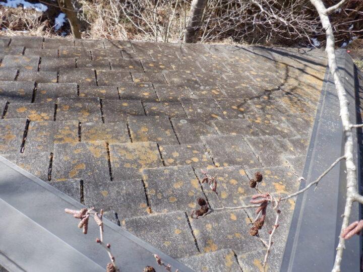 塗膜剥離、カビ・苔の発生