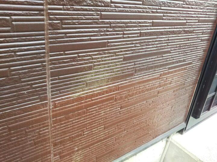 外壁 カビ・藻の発生