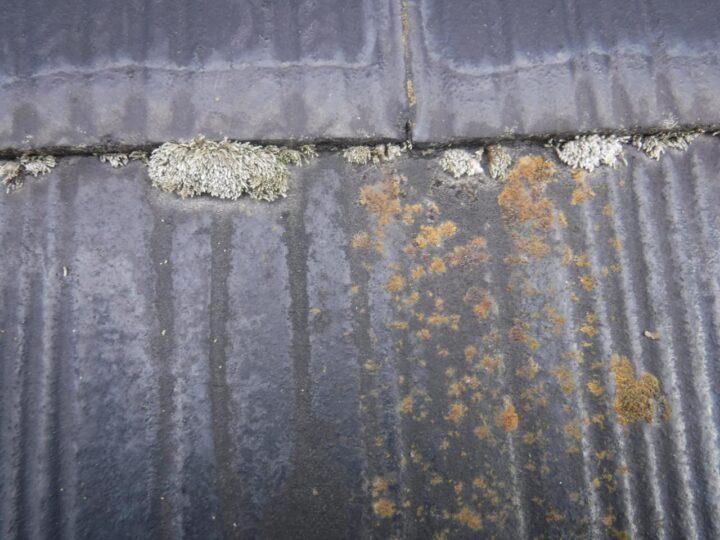 屋根 カビ・苔の発生